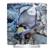 A Titan Triggerfish Faces Shower Curtain
