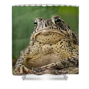 A Toad Appears To Be Frowning He Sits Shower Curtain