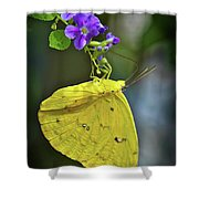 A Touch Of Beauty Shower Curtain