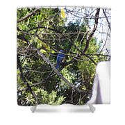 A Touch Of Blue 2 Shower Curtain