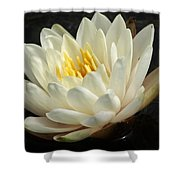 A Touch Of Elegance On The Pond Shower Curtain