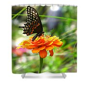 A Touch Of Summer's End Shower Curtain