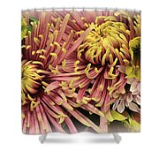 A Touch Of Yellow On Pink Mums Shower Curtain