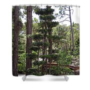 A Towering Tree Shower Curtain