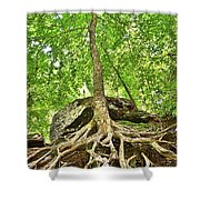 A Tree And It's Roots Shower Curtain