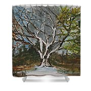 A Tree For All Seasons  Shower Curtain