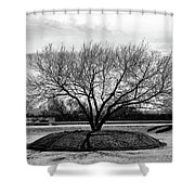 A Tree In Fort Worth Shower Curtain