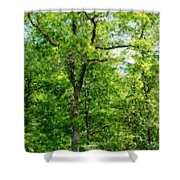 A Tree In The Woods At The Hacienda  Shower Curtain