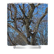 A Tree In Winter- Vertical Shower Curtain