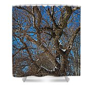 A Tree In Winter- Horizontal Shower Curtain