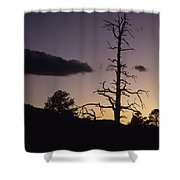 A Tree Is Silhouetted By The Setting Shower Curtain
