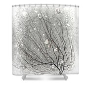 A Tree On The Beach #2 - Seaweed And Shells Shower Curtain