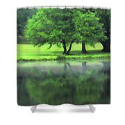 A Tree Reflected Shower Curtain