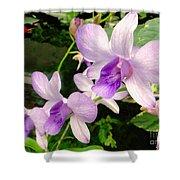 A Trio Of Pale Purple Orchids Shower Curtain
