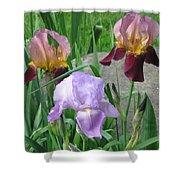 A Trios Of Irises Shower Curtain