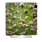 A Trunk Of Thorns Shower Curtain