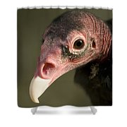 A Turkey Vulture At The Henry Doorly Shower Curtain