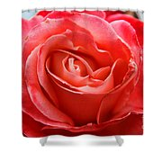 A Unique Rose Just For You Shower Curtain