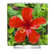 A Very Red Flower Shower Curtain
