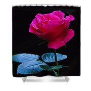 A Very Special Rose Shower Curtain