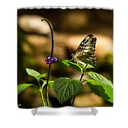 A  View Of A Butterfly Shower Curtain