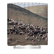 A View Of Sheep In The Judean Desert Shower Curtain