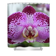 A Violet Orchid Shower Curtain