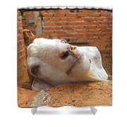 A Visit With A Smiling Goat Shower Curtain