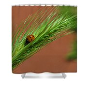 A Walk In The Tall Grass Shower Curtain