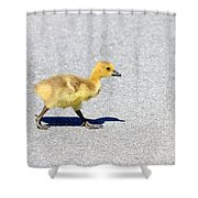 A Walk On Asphalt  Shower Curtain