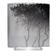 A Walk Through The Mist Shower Curtain