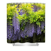 A Wealth Of Wisteria Shower Curtain