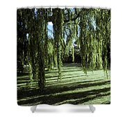 A Weeping Willow Casts Long, Cool Shower Curtain