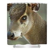 A Western Tufted Deer Elaphodus Shower Curtain