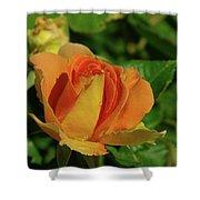 A Wet Rose  Shower Curtain