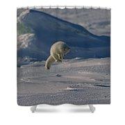 A White Arctic Fox, Alopex Lagopus Shower Curtain