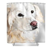 A White Golden Retriever Shower Curtain