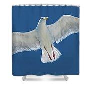 A White Gull Flying In Sky Shower Curtain