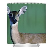 A White-tailed Deer On The Prairie Shower Curtain