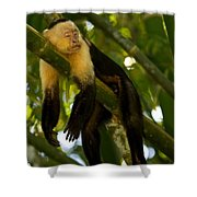 A White-throated Capuchin Monkey Shower Curtain
