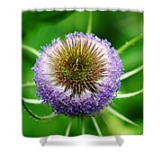 A Wild And Prickly Teasel Shower Curtain