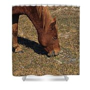 A Wild Pony In Assateague Shower Curtain