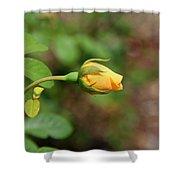 A Wilder Rose Shower Curtain