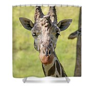 A Wink Shower Curtain