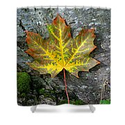 A Work Of Nature's Art Shower Curtain