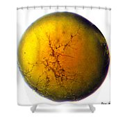 A World All Its Own Shower Curtain