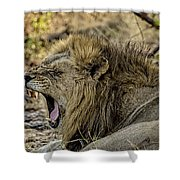 A Yawning Lion Shower Curtain