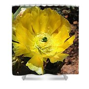 A Yellow Cactus Blossom Shower Curtain