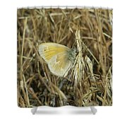 A Yellow Moth  Shower Curtain