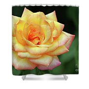 A Yellow Rose Shower Curtain
